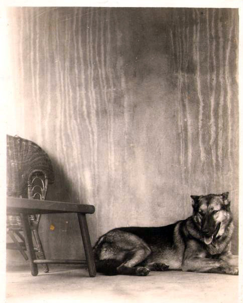 Eric's great great great Aunt Polly's German Shepherd Dog — photo circa 1910. They lived in the Midwest. Pretty neat!