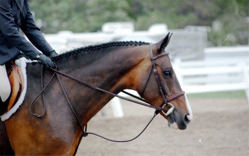 Animals Horse Braids Equine Hunter Hunter Jumper Horse