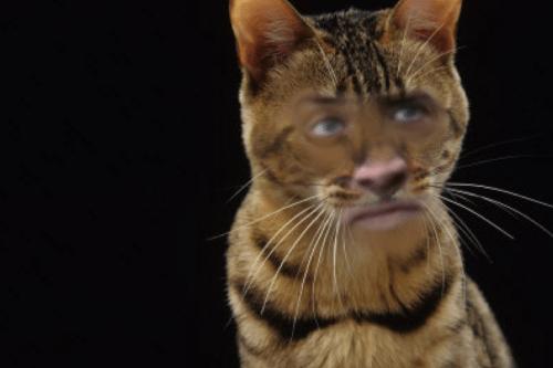 Nicolas-cage-cats • Jacobsanmartin: Nick Cage Cat