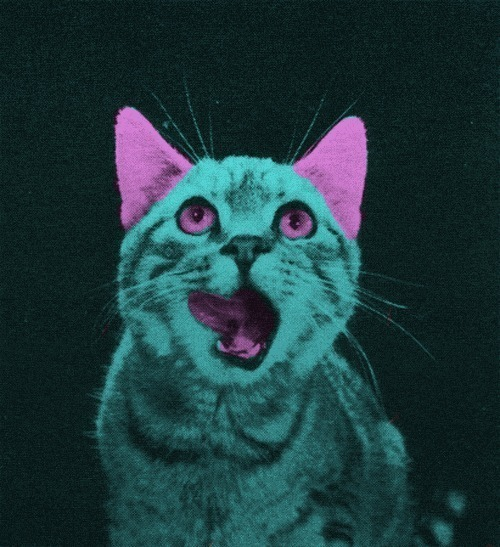 psychedelic cat on Tumblr