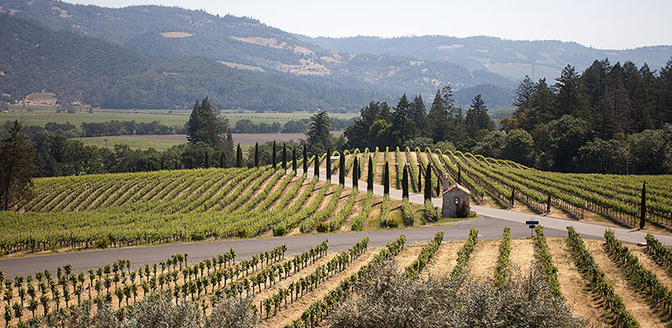 Pinot Noirs we'll be drinking this holiday season