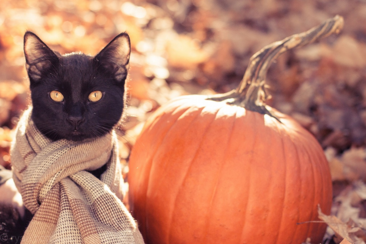 Image result for cats in fall