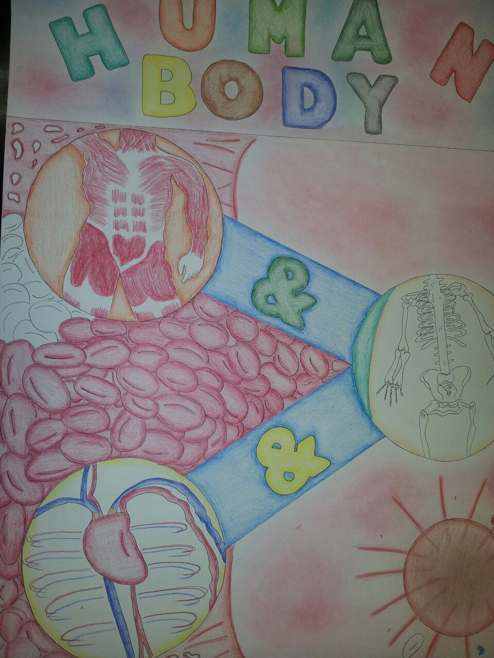 Tuesdays post: I have now finished my project. I drew the heart and chest area as well as some of the ribcage. I have bought the frame but I need to put it in over the weekend. Ms. Kirkby is getting the easel and providing the table. I have only Wednesdays and some Fridays available so it may interfere with some after school activities which is fine if it comes down to that. Hope you enjoyed my art project! It took two months but was well worth it. Only a few more tumblr posts to go! Don't go away.