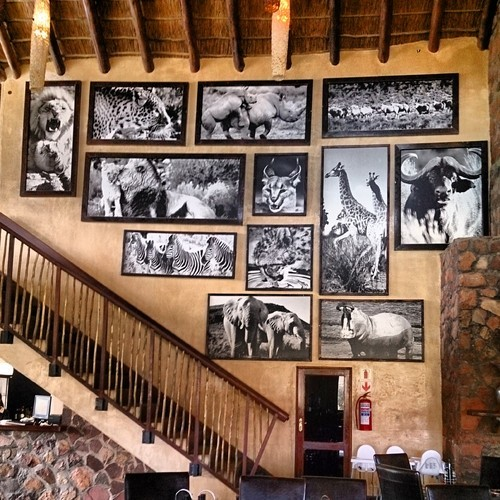 Beautiful cafe at Aquila Game Reserve with a lovely wall of animal collages