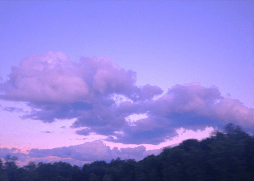 See more ideas about flower aesthetic, planting flowers, pretty flowers. purple skies   Tumblr