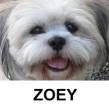 Zoey, our cute rescue dog