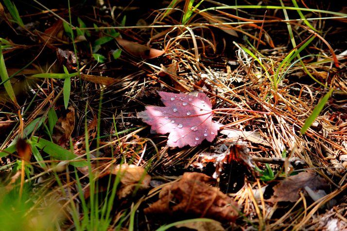 cu leaf with dew LOVE