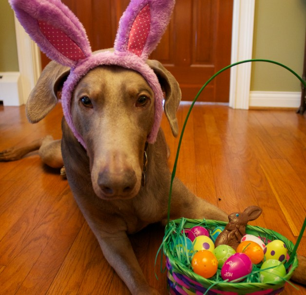 Jack ready for easter