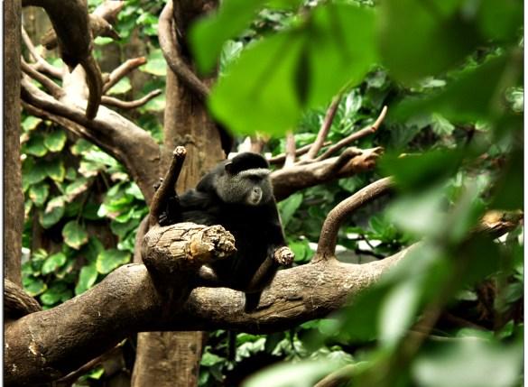 Lied Jungle Omaha Nebraska - Free roaming Monkeys roam the jungle and may just jump on your head