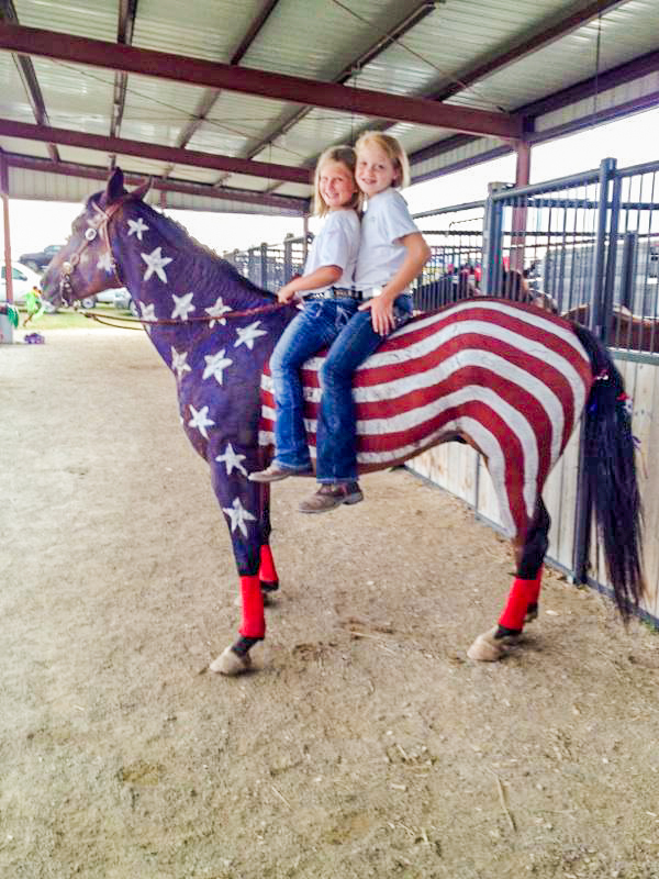 Patriotic Horses At The County Fair 3 Quarters Today