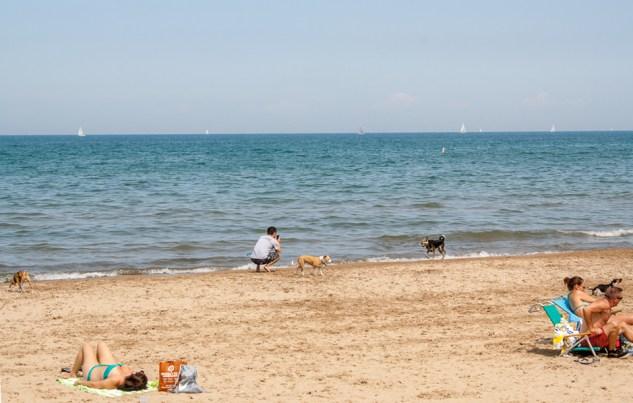 Dog beach on Lake Michigan, Chicago