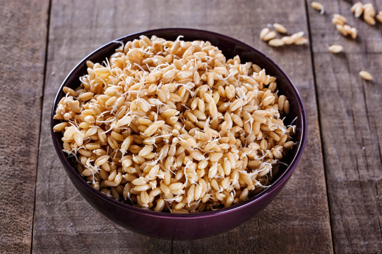 Sprouted wheat germ in a bowl over rustic wooden background. Closeup, selective focus