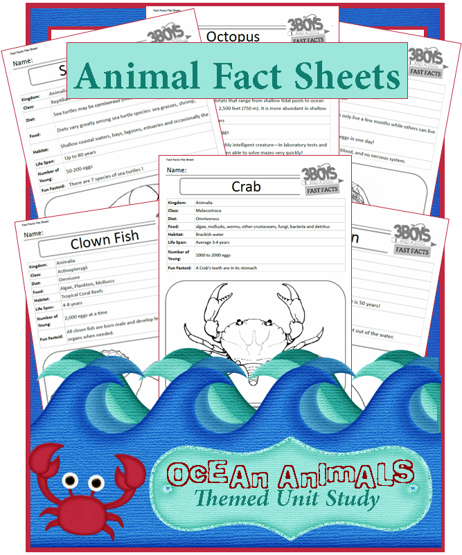 Image of: Amazing Things Facts About Ocean Animals unit Study Series Boys And Dog Facts About Ocean Animals unit Study Series Boys And Dog