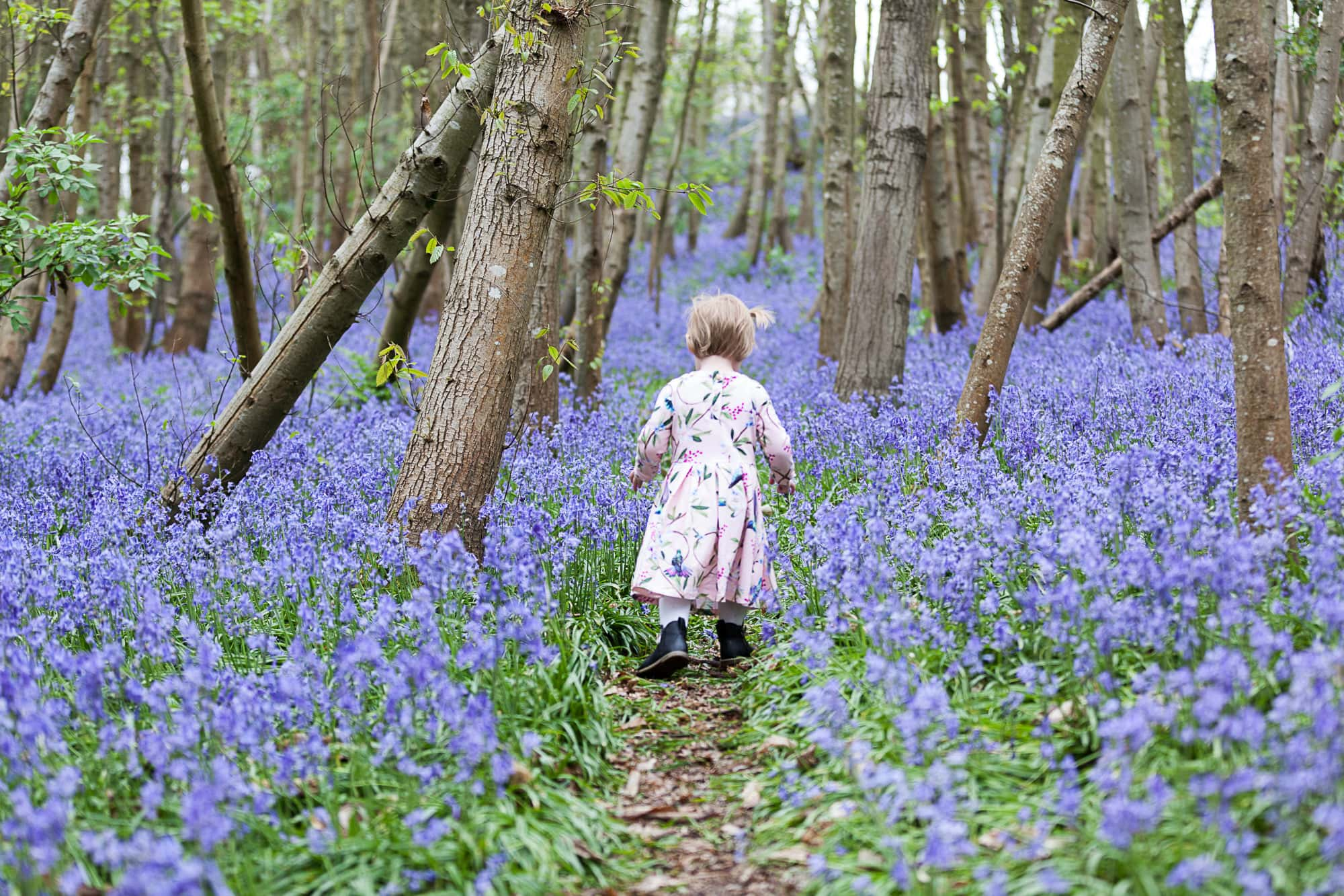 little girl walking into the bluebells at Riverhill Himalayan Gardens at her Sevenoaks family bluebell shoot
