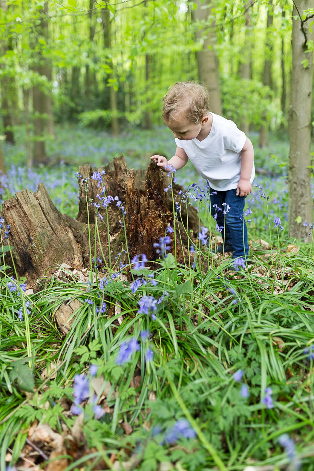 little boy looking for bugs in a tree stump in the bluebells at his Bexley family bluebell shoot