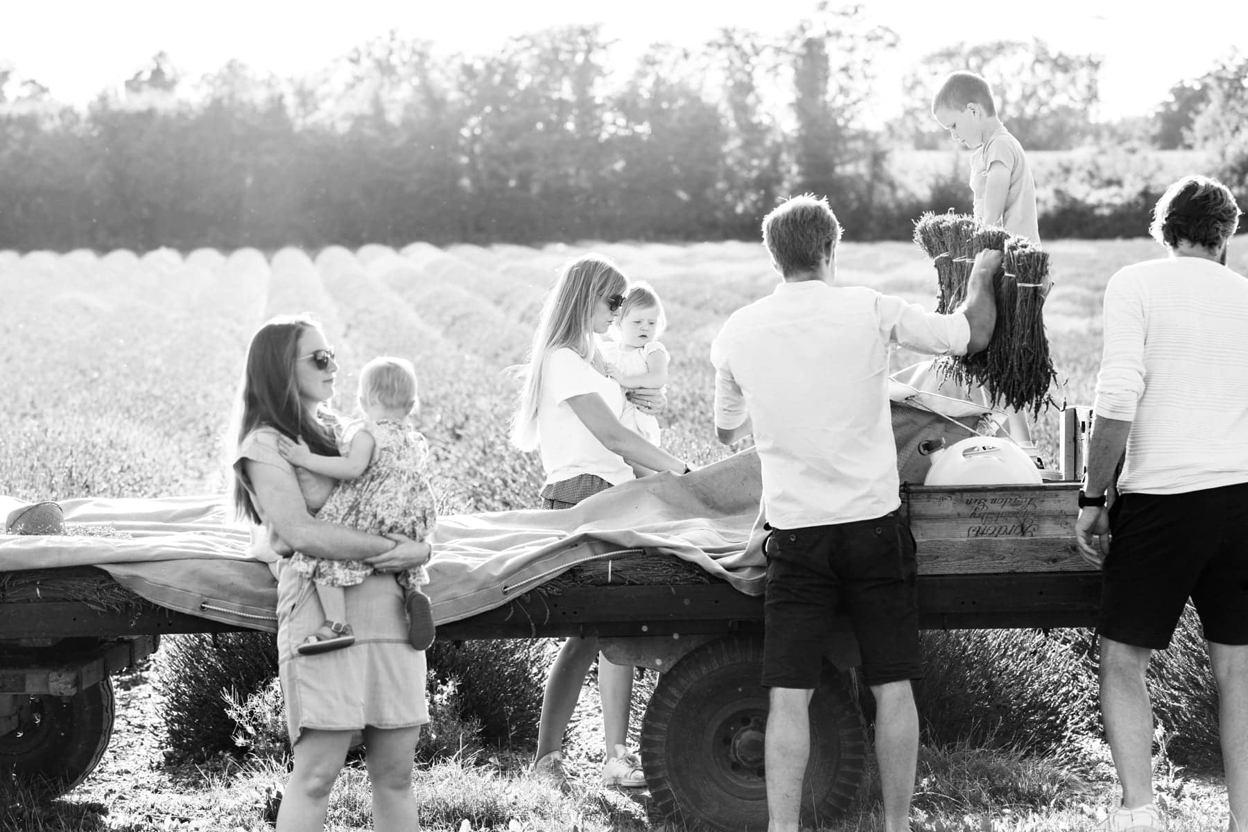 black and white back lit image of family with young children shot in the lavender fields of Castle Farm Shoreham Kent