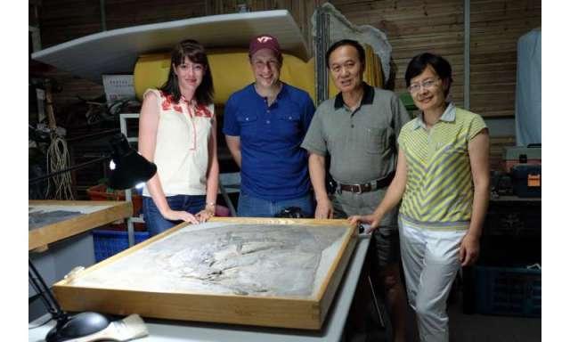 investigadores de Virginia Tech llenan vacío crítico en el registro fósil de phytosaurs chinos