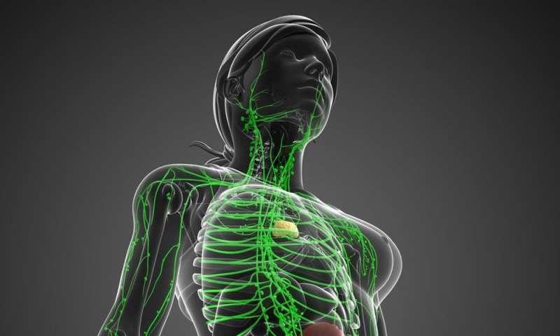 Mappatura dei 100 trilioni di cellule che compongono il tuo corpo