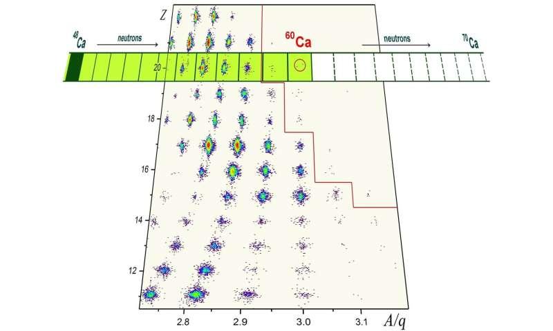 Los investigadores de MSU lideran el equipo que descubre el átomo de calcio más pesado conocido