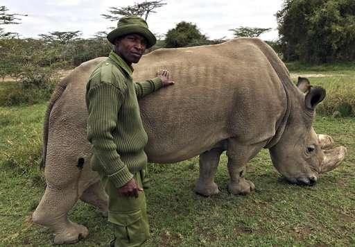 Výsledok vyhľadávania obrázkov pre dopyt white rhino