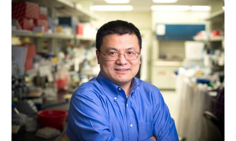 Los científicos identifican un complejo de proteínas que da forma al destino de las células T