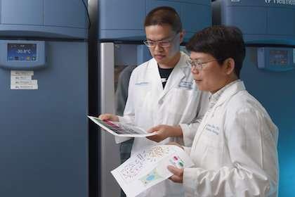 Científicos de UTSW identifican microrreactores del cuerpo para inmunidad innata