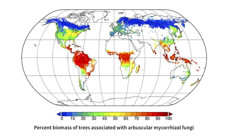 Researchers map symbiotic relationships between trees and microbes worldwide