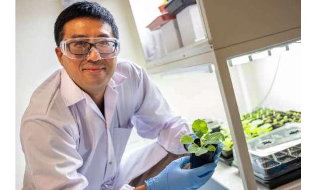 Des scientifiques découvrent un moyen durable d'augmenter le rendement en huile de graines dans les cultures