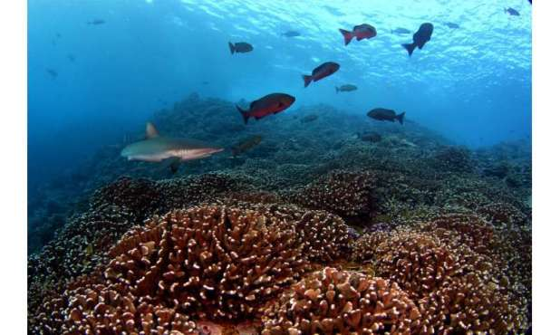 The bacteria that surround coral reefs change in synchrony, even at a great distance