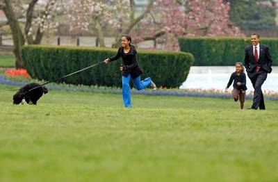 The White House Debuts The Obama's New Dog Bo, A Portuguese Water Dog