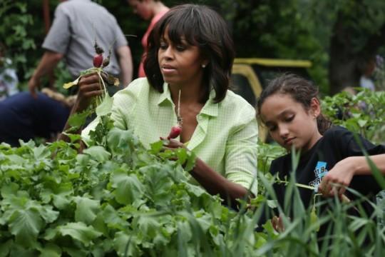 white house garden harvest-6