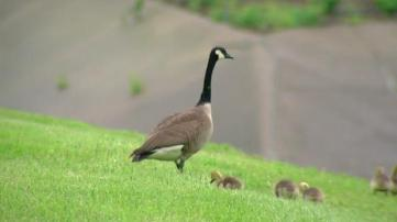 Mother Goose 6