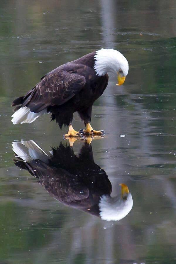 the-eagle-has-landed-c3d3ig5uoaa7wnz