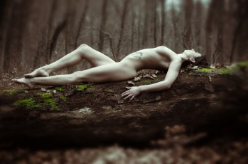 forest_12
