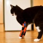 bioniccat Medisch 3D printen