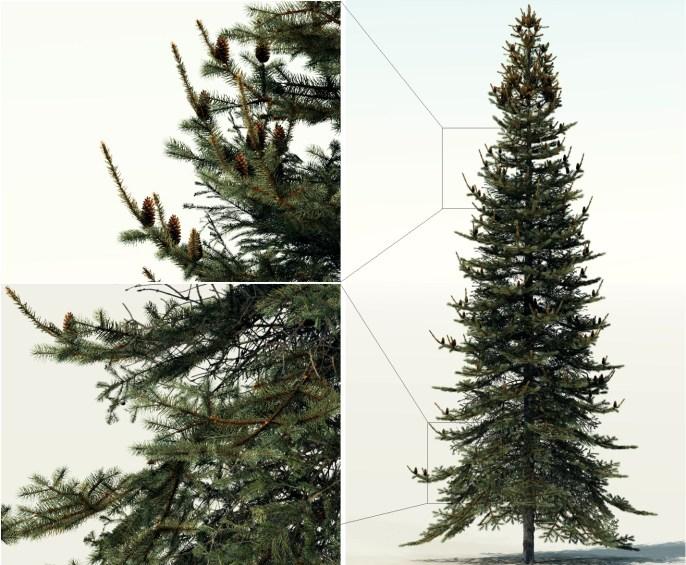 blowup_3edmodel_alberi_photoshop