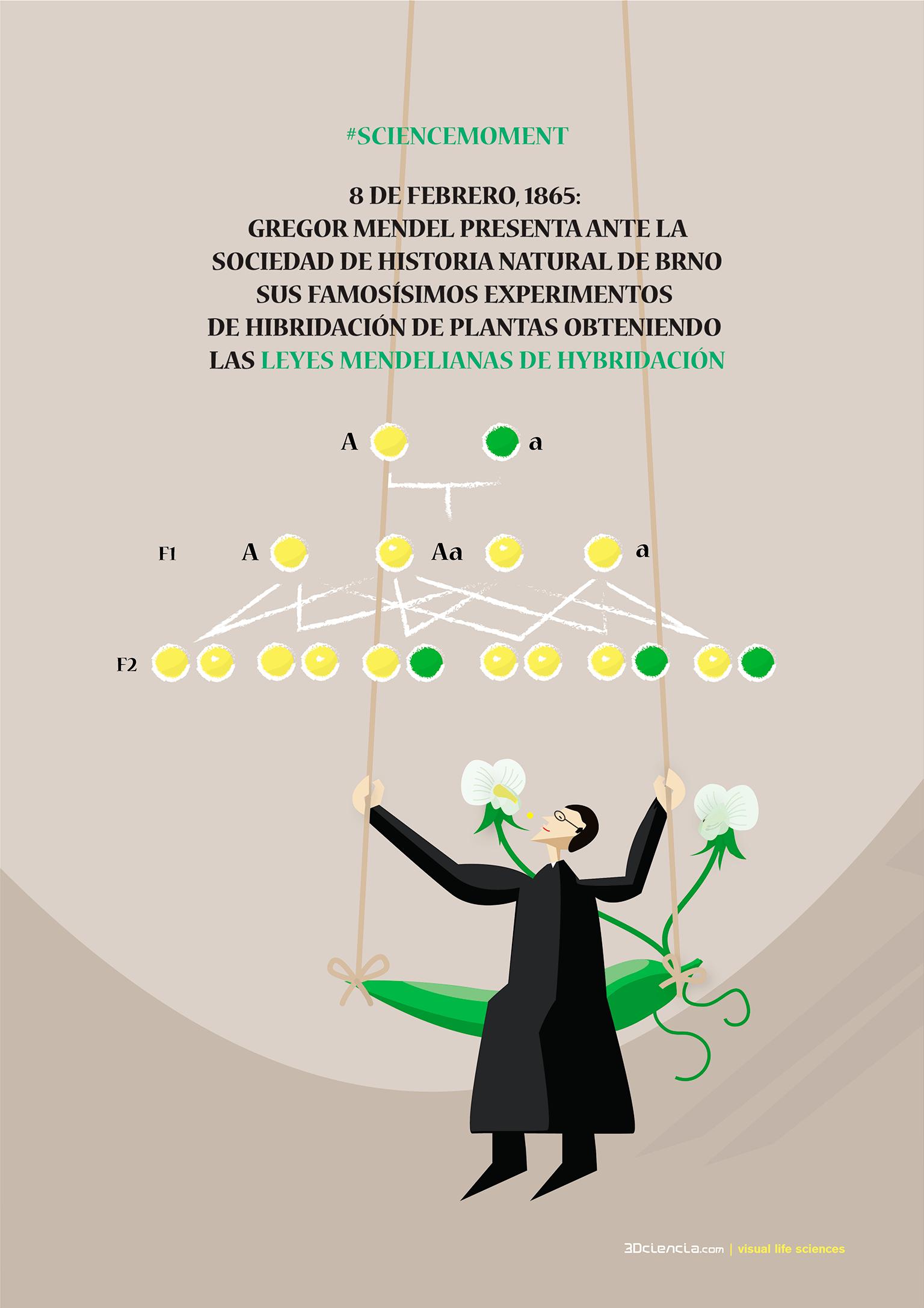 Gregor Mendel Experiments On Plant Hybridization
