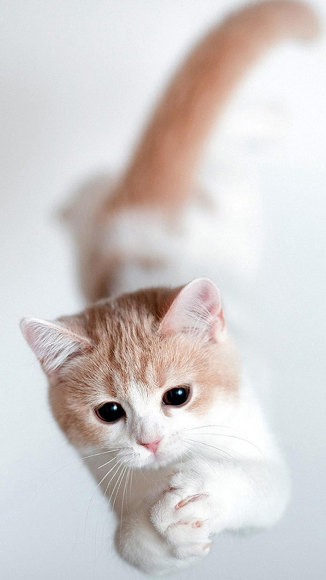Wallpaper Laptop Cat 3d