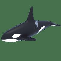 Killer Whale - Orca 3D Model