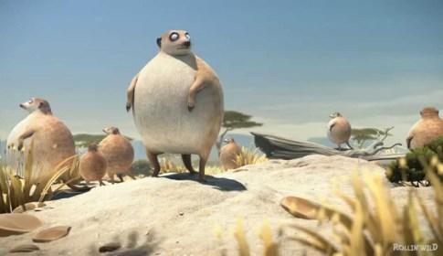 ROLLIN' SAFARI - 'Meerkats'