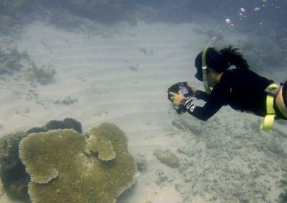 Dr Ferrari imaging a tabulate coral in Lizard Island, GBR