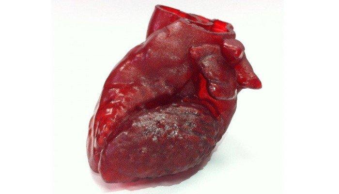 3D printed organs heart