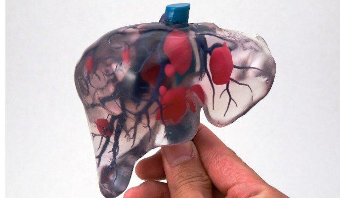 3d printed organs liver