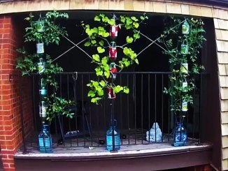 3D printing and gardening