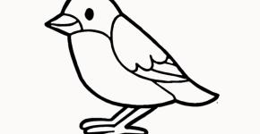 Bird Drawing Easy