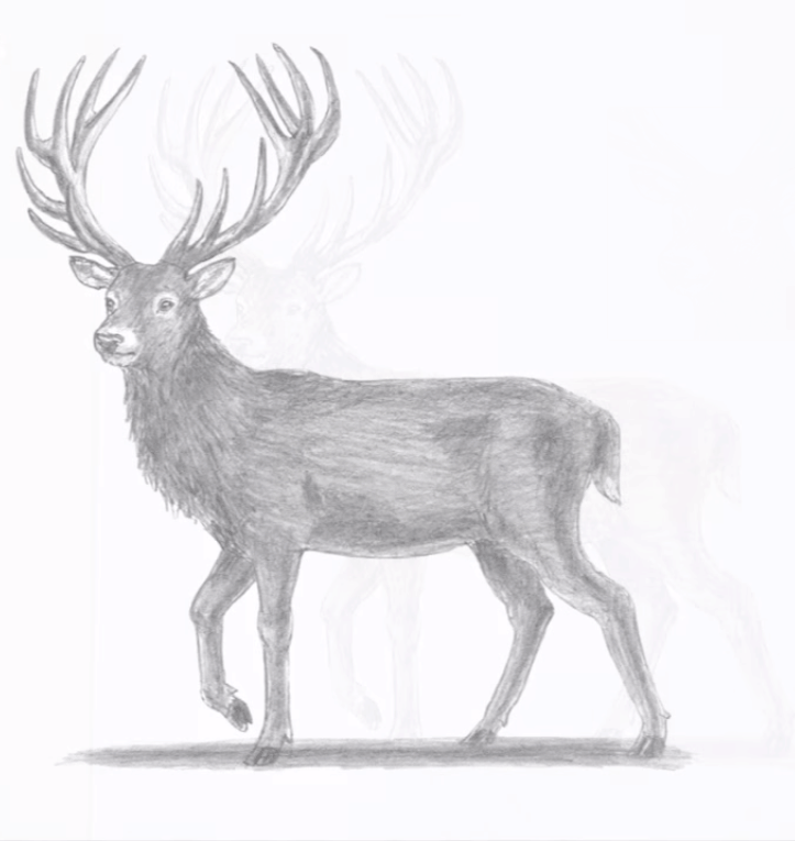 How To Draw A Deer Step By Step Deer