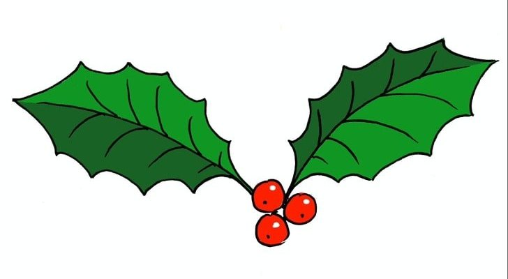 how to draw holly leaves