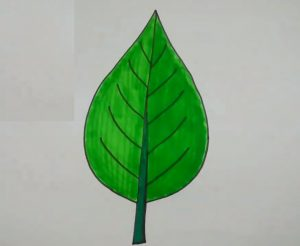 leaf drawing easy