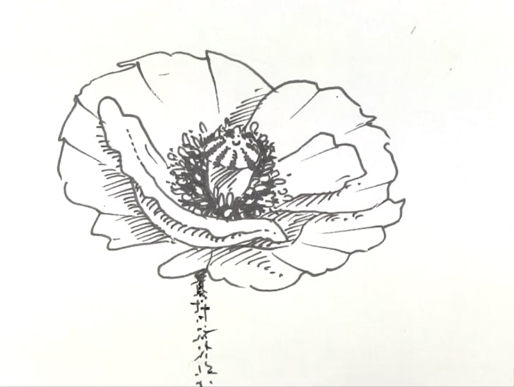 poppy drawing