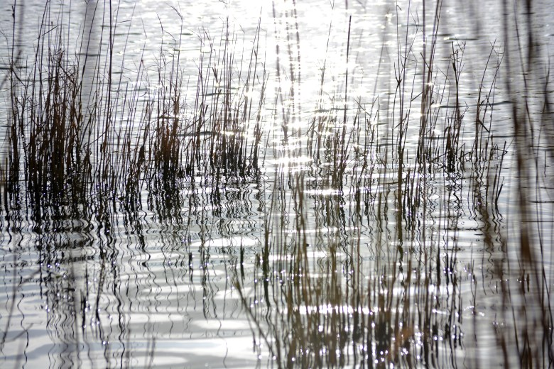 reed beds: stunning landscape cosmeston lakes - 3 eyed raven productions ultimate location guides